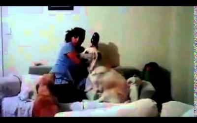 น้องหมาปกป้องแม่จะตี...